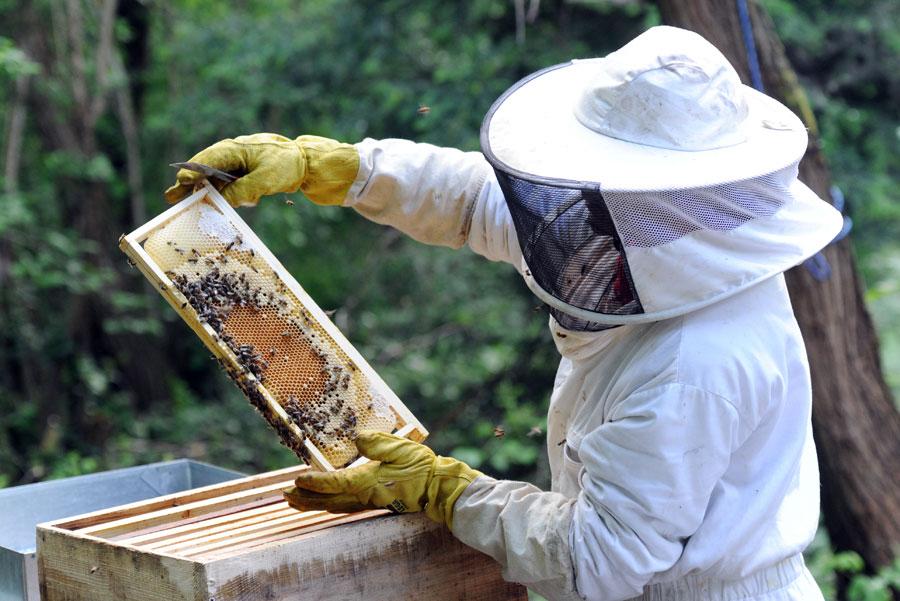 Produits de la ruche - agroalimentaire